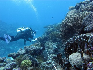 Diver at Cartier Reef