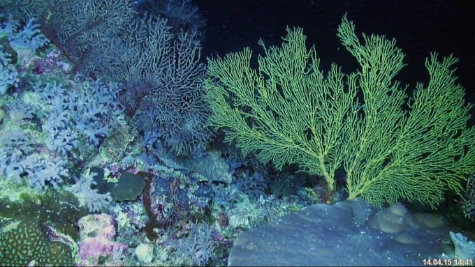 Deeper coral communities of Scott Reef