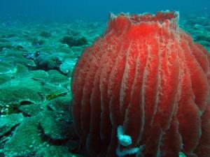 Sponge and mushroom corals