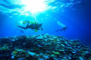Scott reef coral bleaching