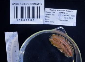 WAMSI Kimberley biodiversity survey